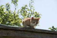 Kleine Katze auf dem Dach