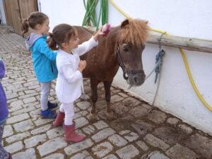 Kinder Pferde